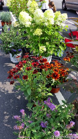 Potted flowers at the Spotsylvania Farmers Market