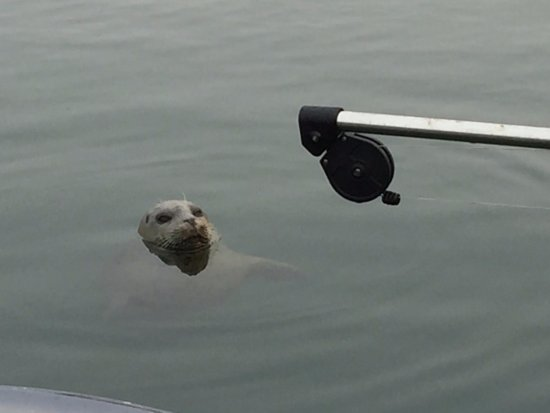 Anacortes, WA: Seal at the dock when we returned looking for a handout