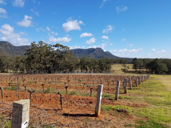 Wine Country Tours: Hunter Valley-some of the oldest Shiraz vines still producing in the world