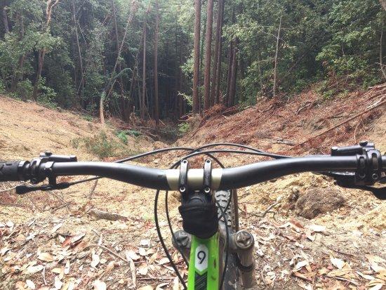 Forest of Nisene Marks State Park : photo1.jpg