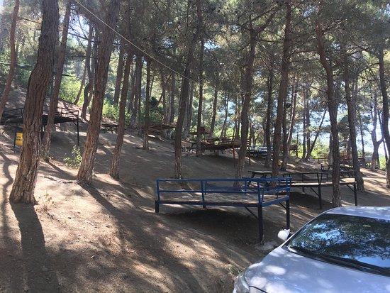 Sogukoluk (Guzelyayla) Piknik Alani: photo1.jpg