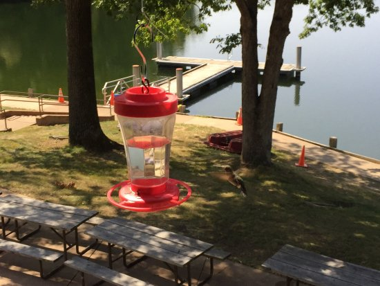 Marshall, IL: Hummingbirds and a Great Lake view.