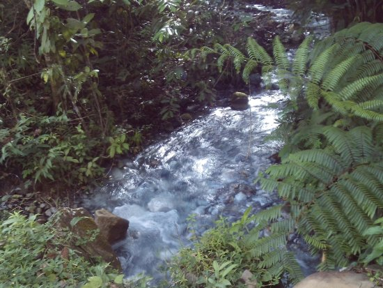 瓜納卡斯特自然保護區張圖片