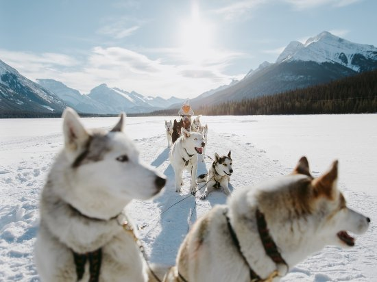 Alberta, Canadá: Dogsledding: Come for the adventure, stay for the adorable puppies.