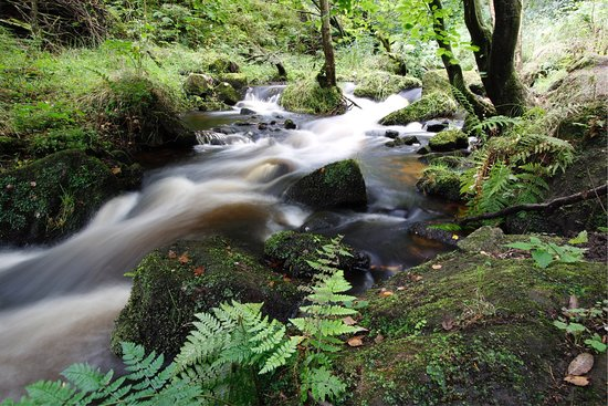Rivelin Valley Nature Trail: Wyming brook