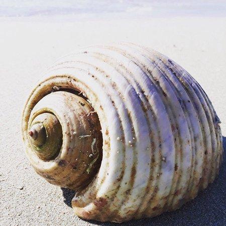 Fame Beach 사진