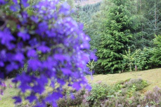 หมู่บ้าน Invermoriston, UK: View from rear - Pine tree's everywhere