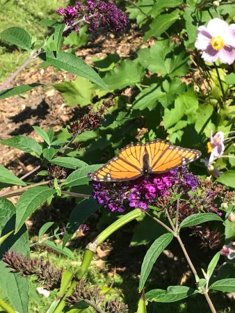 Red Bay, Kanada: They have a Monarch Way Station that was full of beautiful Monarchs. The quiet pond is full of f