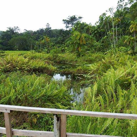 El paisaje y la vegetación son maravillosos