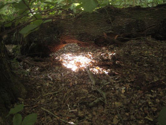Peterlee, UK: A pool of light under a fallen tree