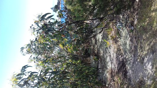 Bicheno, Australia: A wonderful path to follow & oversee the massive rocky shoreline while walking to the shops.