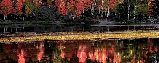 Duck Creek Village, UT: Fall Colour at Aspen Mirror Lake