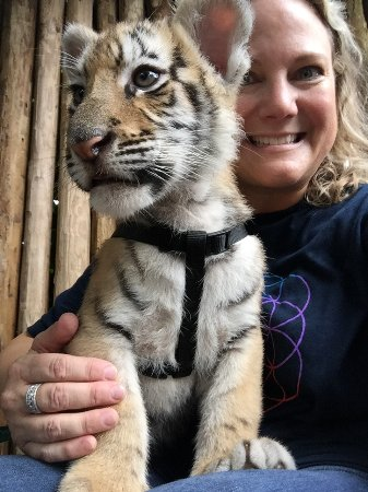 Zoological Wildlife Foundation: Sarabi the Bengal tiger cub