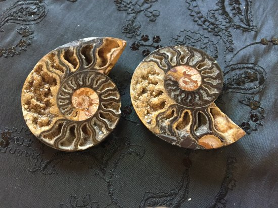 Солт-Спринг-Айлэнд, Канада: Black Ammonite Fossil Pair