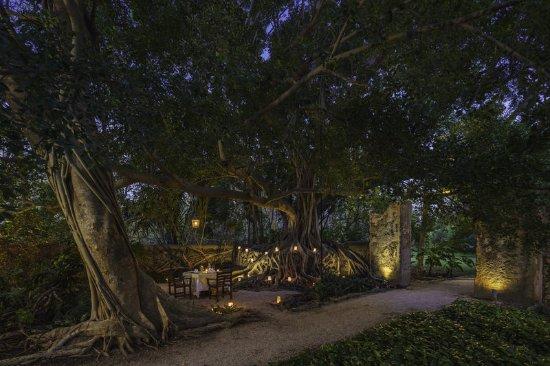 Tixkokob, Mexiko: Dreams Tree