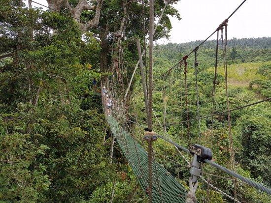 Vanuatu Jungle Zipline: Suspension bridge
