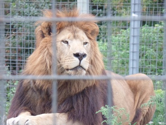 Rock Springs, Wisconsin: King of the jungle