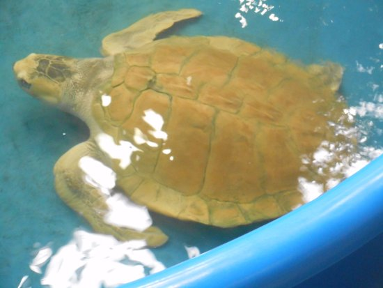 Surf City, NC: The Karen Beasley Sea Turtle Rescue and Rehabilitation Center