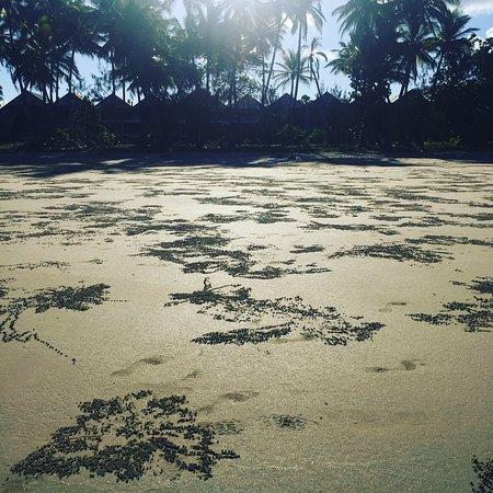 Mission Beach, Australia: photo1.jpg
