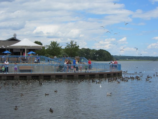 Linesville, Pensilvania: Pymatuning Spillway extended observation platforms allows for many visitors to enjoy the fun