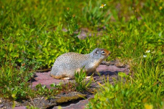 Hidden Lake: Prairie Dog