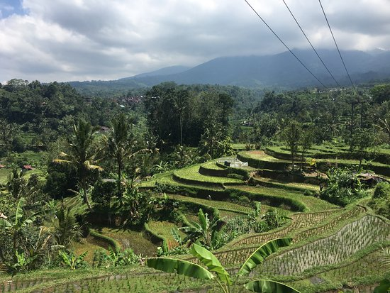 Bali Traditional Tours - Day Tours: Jatiluwih