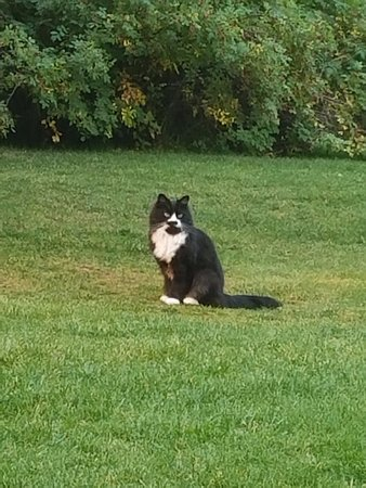 Moose Creek Ranch: Resident farm cat