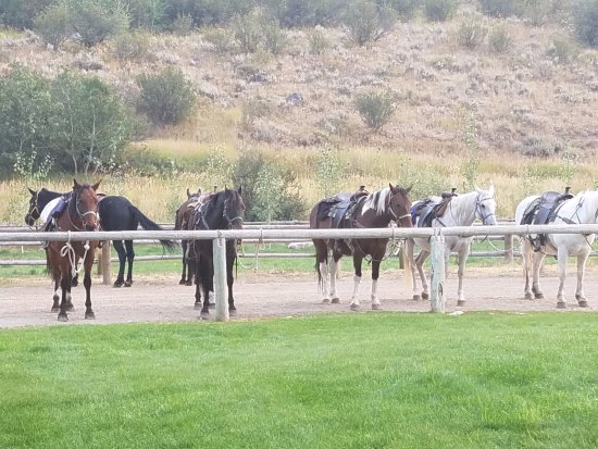 Víctor, ID: Horses getting ready for the trail ride.