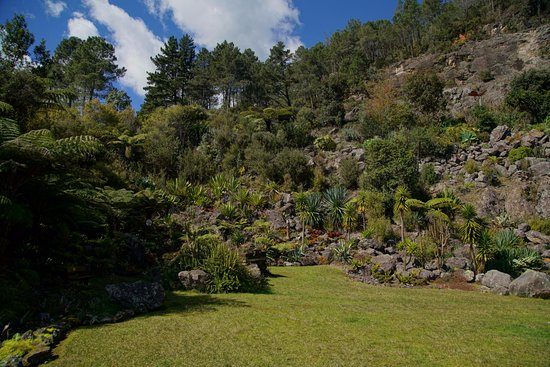 Bay of Plenty Region, نيوزيلندا: Grass Amphitheater and area for kids to run and play 