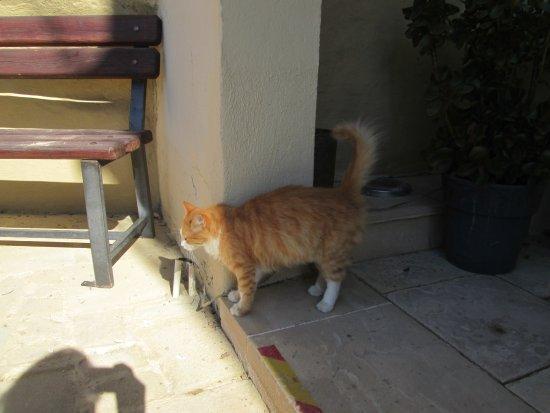 Deftera, ไซปรัส: Кот