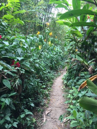 Naihehe Caves: Path to cave