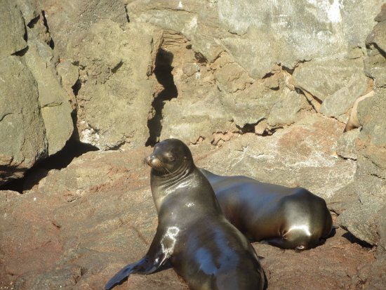 Santiago, Ecuador: sea lions