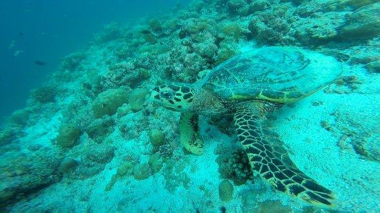 Atmosphere Kanifushi Maldives: 12E8D1E678D1FDEF49EFF8AEF1A6FEE8_large.jpg