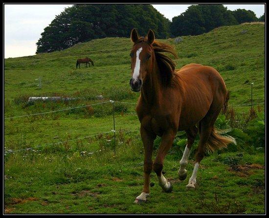 Ferme Equestre de Berthiare