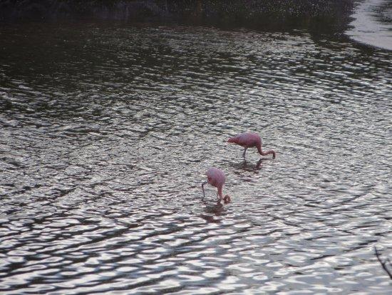 Floreana, Ecuador: salt lake