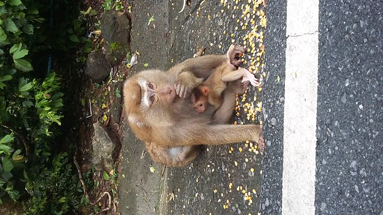 Monkey Hill: 20170828_143621_large.jpg