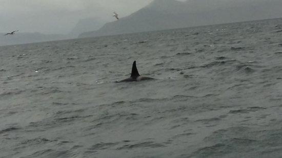Laki Tours : orca