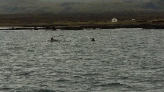 Laki Tours : basking shark