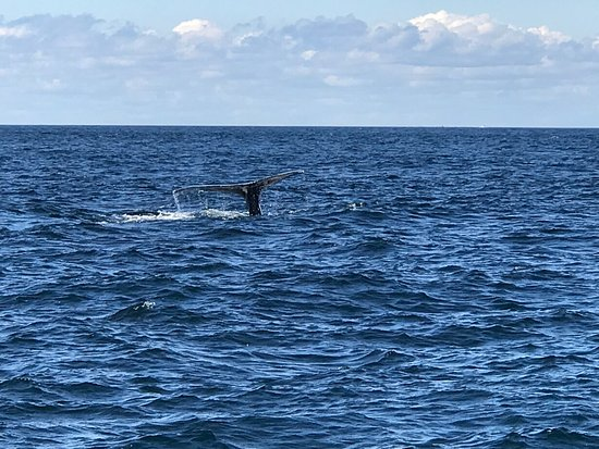 Granite State Whale Watch: photo4.jpg