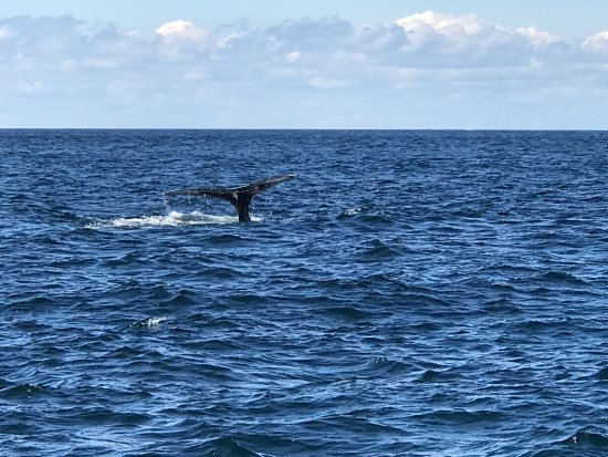 Granite State Whale Watch: photo5.jpg
