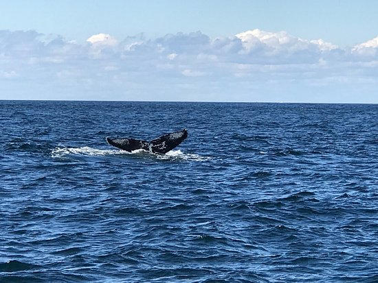 Granite State Whale Watch: photo6.jpg