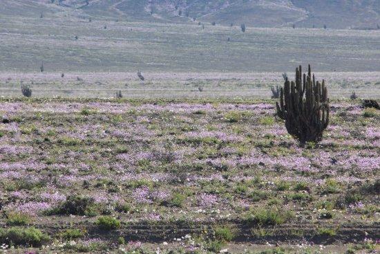 Parque Nacional Llanos de Challe: Lo habitual es ver sólo tierra y piedras