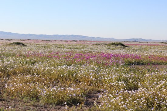 Parque Nacional Llanos de Challe: Y así por kilómetros...