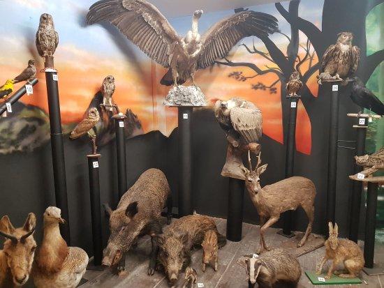 Museo Hontza