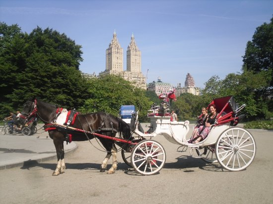 central park nyc horse carriage rides picture of nyc horse carriage rides new york city. Black Bedroom Furniture Sets. Home Design Ideas