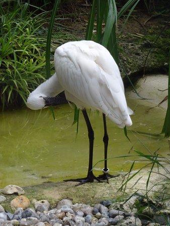Cleres, France: Parc animalier Clères