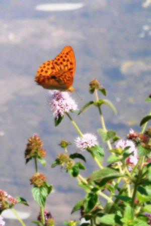 Camping Naturiste Le Couderc: prachtige natuur