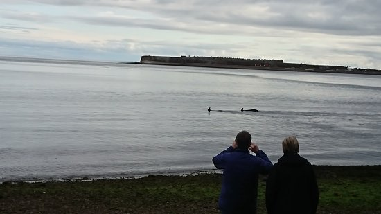 Rosemarkie, UK: Dolphin watching on the turn of the tide.