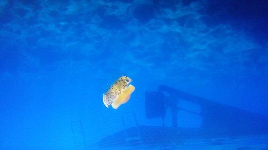 La Guaza: Spettacolo assicurato sopra e sotto il mare.