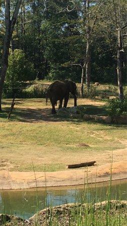 Birmingham Zoo: photo2.jpg